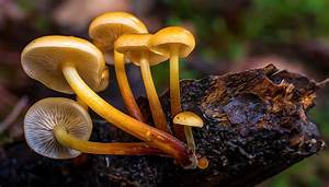 Free Picture  Mushroom  Fungus  Nature  Macro  Vegetable