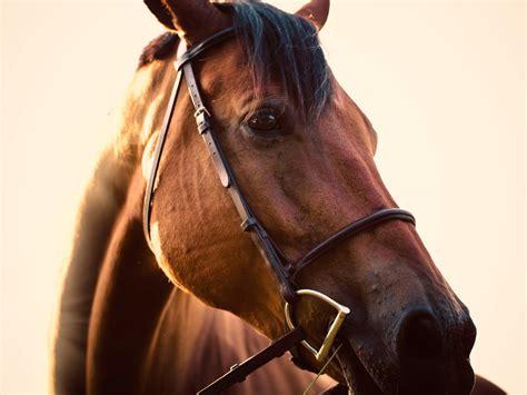 arthrose und arthritis beim pferd wie koennen wir sie