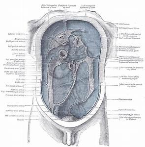 Paramesenteric Gutters