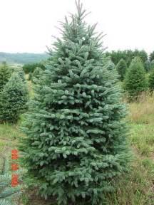 brantley snipes landscape design oh christmas tree