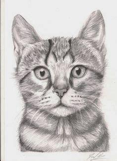 draw  cat head draw  realistic cat step  step