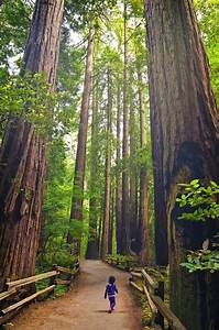 17 Best images about Redwood National Park, California on ...