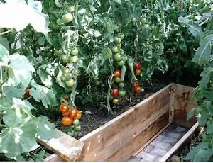 Tomaten Balkon Kübel : tomaten auch auf extrem balkon garten ~ Yasmunasinghe.com Haus und Dekorationen