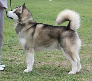 Cute Pinterest Es Black And Black White Husky German ...