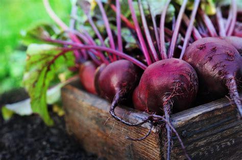 comment cuisiner la betterave betterave quoi faire avec et comment cuisiner ce légume