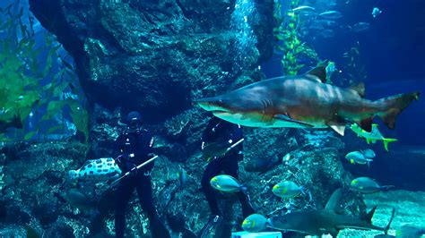 Why You Should Visit Sea Life Ocean World