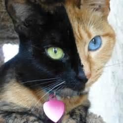 venus the cat venus the best cat personalities of 2012
