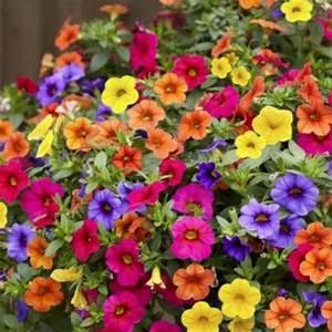 Plantes Et Fleurs Pour Balcon : graines de plantes annuelles et fleurs annuelles ~ Premium-room.com Idées de Décoration