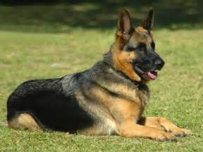dog pictures collections