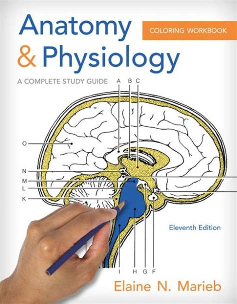 anatomy and physiology coloring workbook anatomy physiology coloring workbook a complete study