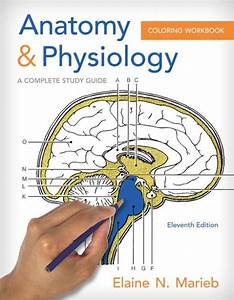 Anatomy  U0026 Physiology Coloring Workbook  A Complete Study