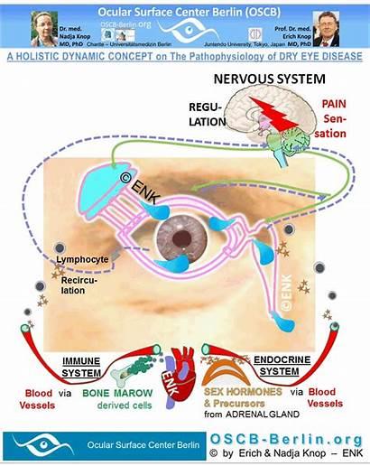 Tears Ocular Tear Gland Regulation Functional Surface