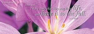 Easter Facebook Cover Photo: Spring flower celebrating the ...