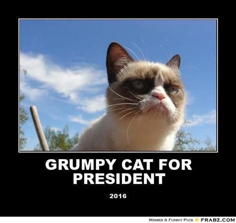 Grumpy Cat Monday Meme - 1000 images about grumpy cat on pinterest grumpy cat movie happy and monday face