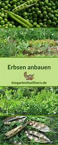 Mischkultur Im Garten : mischkultur mit erbsen one jump from eden pinterest ~ Orissabook.com Haus und Dekorationen