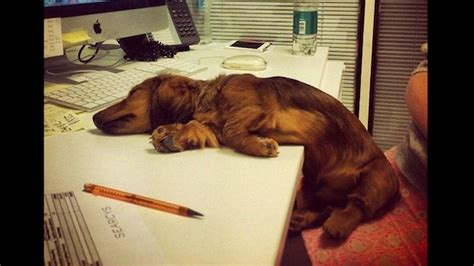 adorable dogs sleeping  crazy positions    day