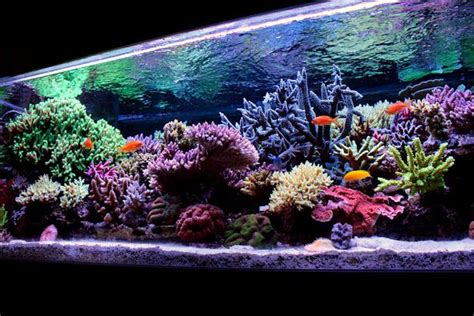 coral reef tank fish tanks