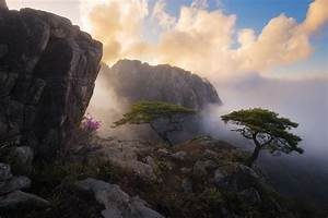 Photography, Nature, Landscape, Spring, Wildflowers, Trees, Mountains, Mist, Cliff, Clouds