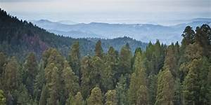 California's Drought Has Killed Over 12 Million Trees In ...