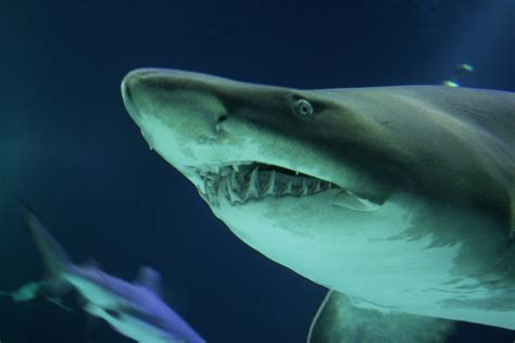 compensated   shark attack injury