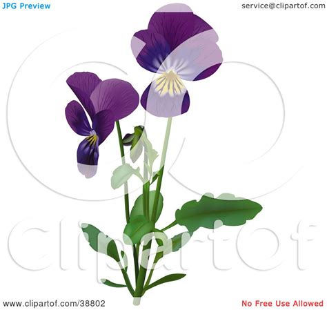 clipart illustration of purple viola sweet violet