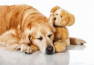 Video Pour Chien : doudou chien peluche et doudou pour chien et chiots polytrans ~ Medecine-chirurgie-esthetiques.com Avis de Voitures