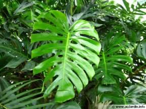 Le Uv Plante Interieur by Les Plantes D 233 Polluantes D Int 233 Rieur