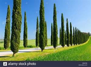 Toskana Zypresse Kaufen : italienische zypresse cupressus sempervirens zypressen allee im fr hling san quirico d ~ Watch28wear.com Haus und Dekorationen