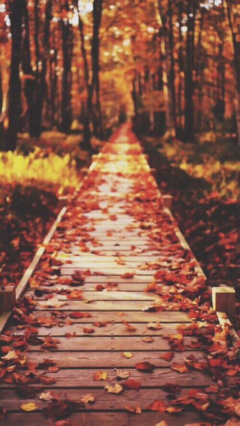 Aesthetic Fall Backgrounds Iphone by Fall Iphone Wallpaper Wallpapers Fall