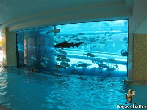 home shark tank aquarium new shark tank tours aquarium