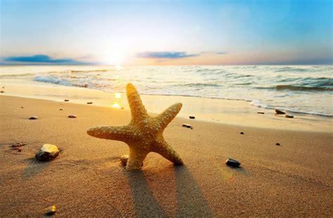 nature starfish sea river wave water sand stones