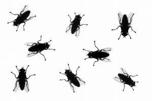 Fliegen Im Fensterrahmen : fliegen sind nervige plagegeister aber es gibt viele m glichkeiten sie los zu werden ~ Buech-reservation.com Haus und Dekorationen