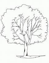 Coloring Oak Tree Popular sketch template