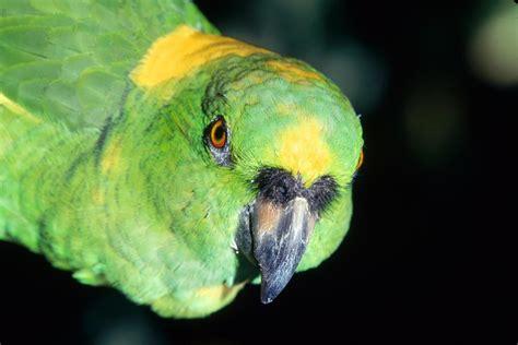 Wildlife Photography: Exotic Birds