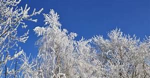 Bäume In Kübeln : frosttrocknis bei b umen im winter verhindern ~ Lizthompson.info Haus und Dekorationen