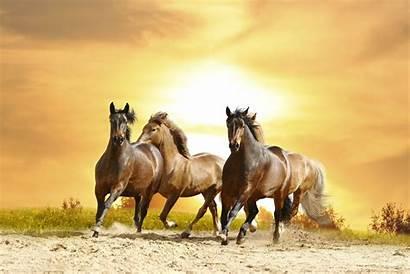 Horse Mustang Wallpapers Wild