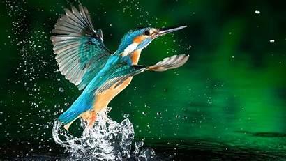 Birds Wallpapers 4k Exotic Flash Desktop
