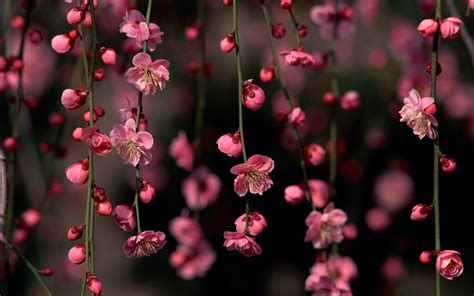 Beautiful Spring Flower  Wallpaper, High Definition, High