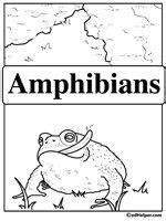reptile  amphibian lesson plans  pinterest