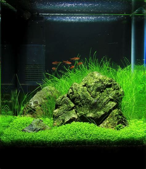 nano tank aquascape images  pinterest nano