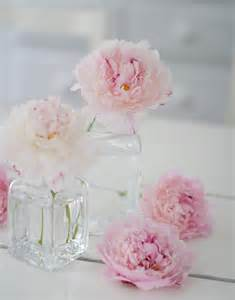 pianese flowers in the country pink peonies