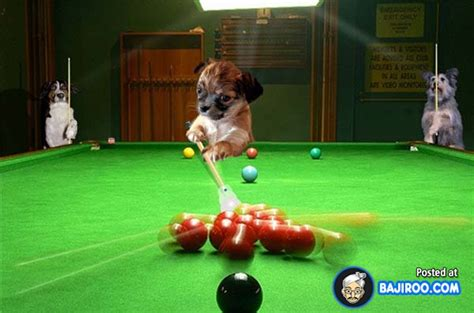 funny snooker   pictures