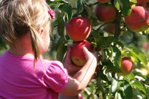 where to go for apple picking big red ep apple picking