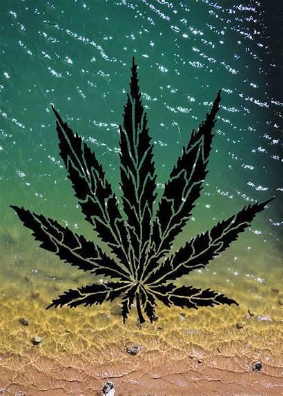 Weed Marijuana Psychedelic Gifs Fondos Maconha Pantalla