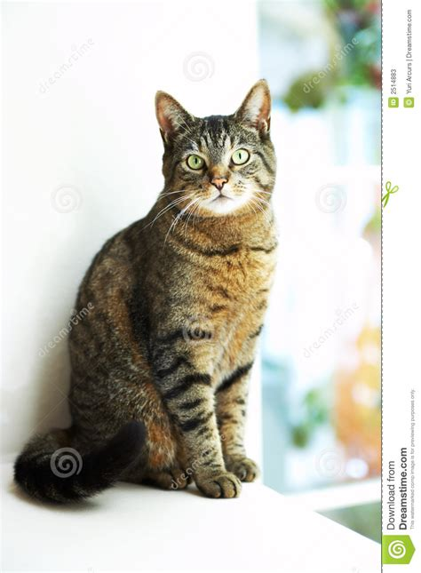 The Cat House by House Cat By Window Stock Image Image Of Pedigree