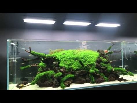 Aquascape Store by Green Aqua The Ultimate Aquascaping Store