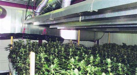 chambre de pousse cannabis la majorité du cannabis pousse en appartement ghi