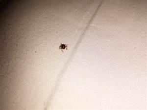 Leg bite marks foto di gansevoort park avenue nyc new for Bed bug marks