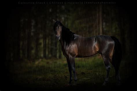 rain horse manip deviantart take