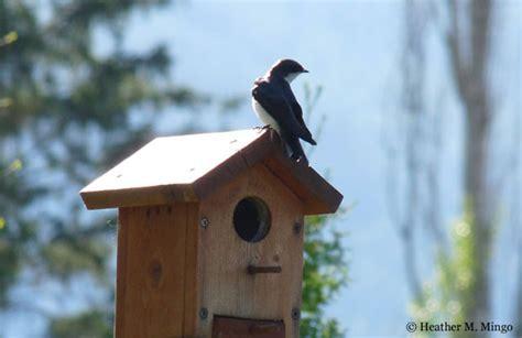 swallow bird house plans web sex gallery